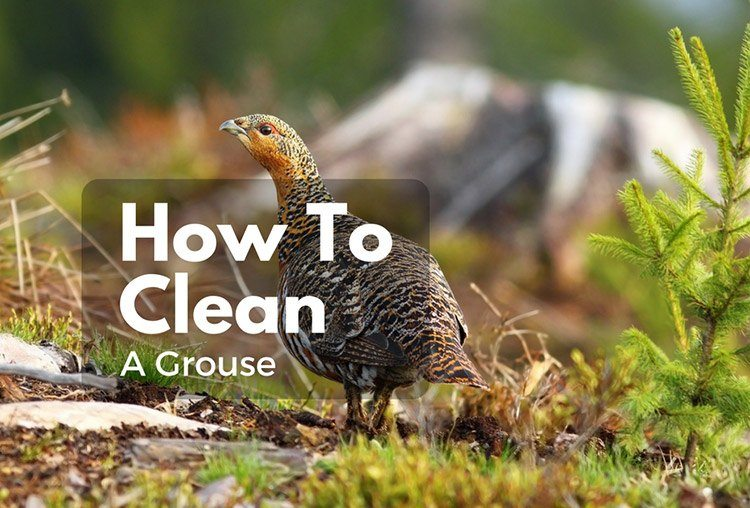 How to clean a grouse